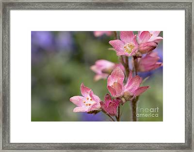 Small Flowers Framed Print by Tine Nordbred