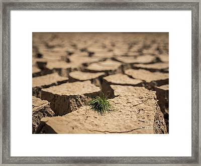 Small Grass Growth On Dried And Cracked Soil In Arid Season. Framed Print by Tosporn Preede