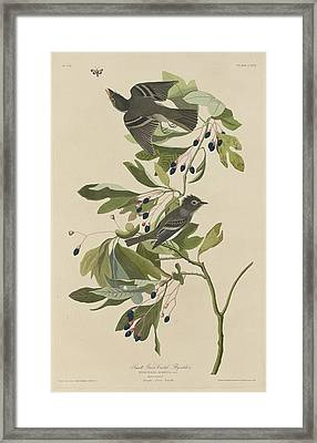 Small Green-crested Flycatcher Framed Print