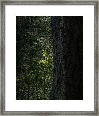 Small Light Framed Print by Joseph Smith