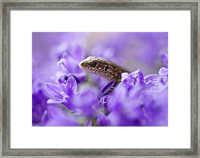 Small Lizard Framed Print by Jaroslaw Blaminsky