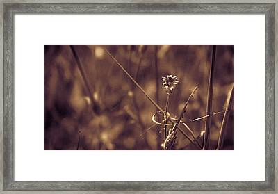 Framed Print featuring the photograph Small by Lora Lee Chapman