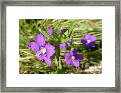 Framed Print featuring the photograph Small Mauve Flowers by Jean Bernard Roussilhe