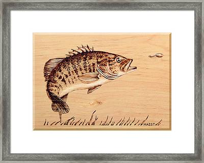 Small Mouth Bass Framed Print by Ron Haist