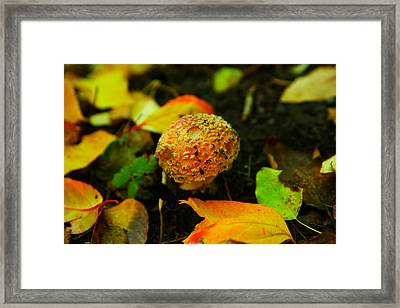 Small Mushroom In Autumn Framed Print by Jeff Swan