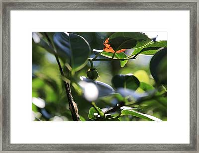 Small Nature's Beauty Framed Print