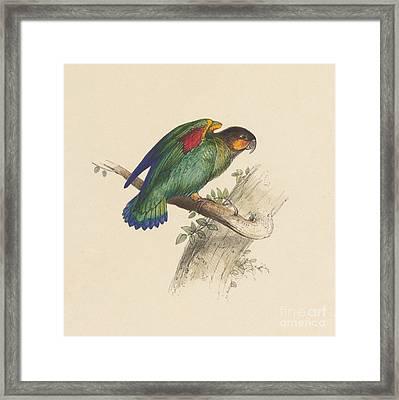 Small Parrot Framed Print
