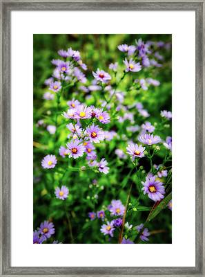 Small Purple Wildflowers Of Wisconsin Framed Print