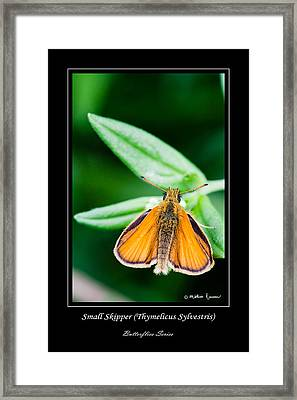 Small Skipper   Thymelicus Sylvestris Framed Print by Mathias Rousseau