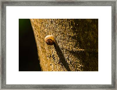 Small Snail On The Tree Framed Print
