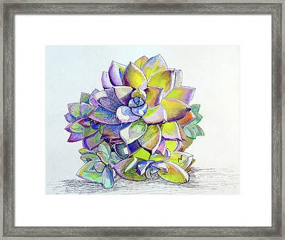 Small Succulent 1 Framed Print