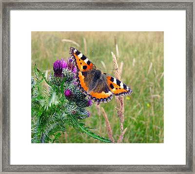 Small Tortoiseshell Butterfly Framed Print by Photo by Suzanne Rowcliffe (suzanne.rowcliffe@gmail.com)