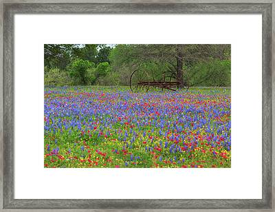 Small Town Texas Wildflowers 1 Framed Print