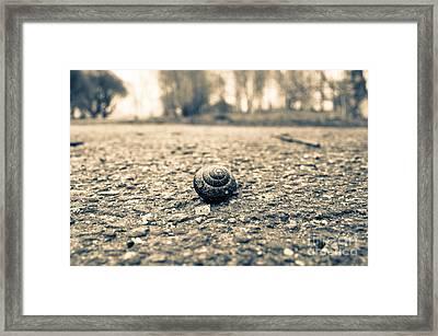 Small Traveler Framed Print