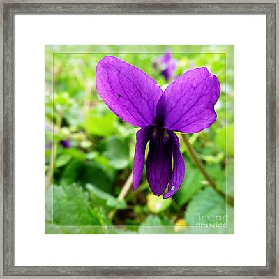 Small Violet Flower Framed Print by Jean Bernard Roussilhe
