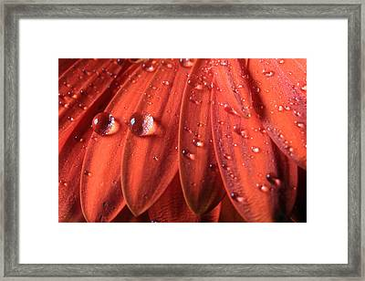 Small Water Drops Framed Print
