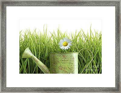 Small Watering Can With Tall Grass Against White Framed Print by Sandra Cunningham