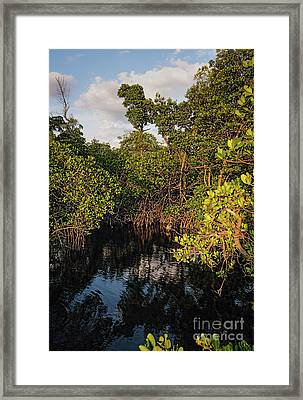 Small Waterway In Vitolo Preserve, Hutchinson Isl  -29151 Framed Print