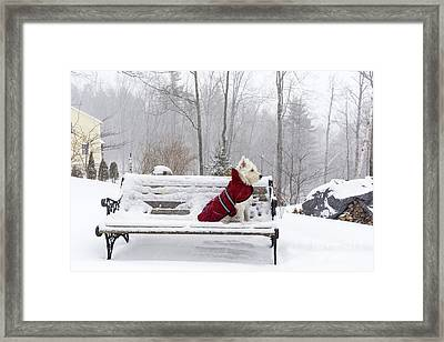 Small White Dog In Snow Storm On Bench Framed Print