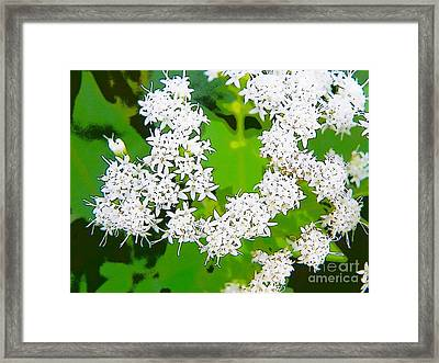 Small White Flowers Framed Print