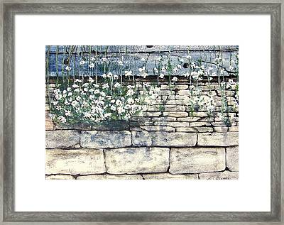 Small White Flowers Framed Print by Terence John Cleary