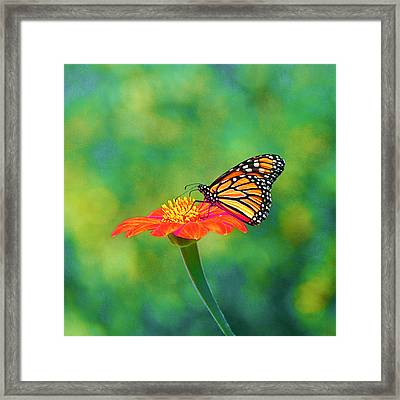 Framed Print featuring the photograph Small Wonders by Byron Varvarigos