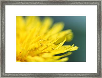 Small World Framed Print by Amy Tyler
