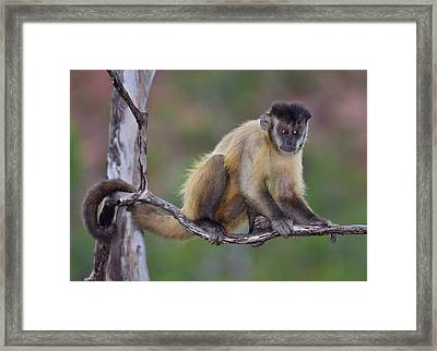 Framed Print featuring the photograph Smarty Pants by Tony Beck