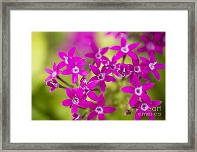 Smell Purple Framed Print