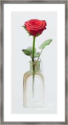 Smell The Rose Framed Print