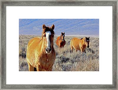 Smile - Mustang Mares Of Eastern Sierra  Framed Print