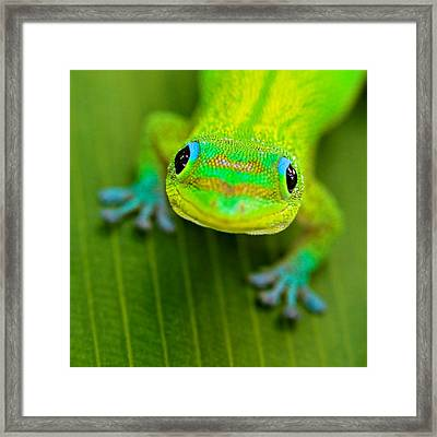 Smile #2 Framed Print by Pete Orelup
