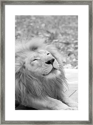 Smile Black And White Framed Print by Judy Whitton