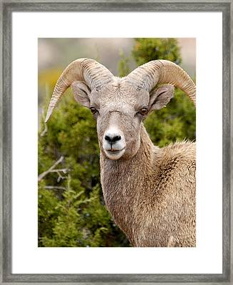 Smile For The Camera Framed Print by Larry Ricker