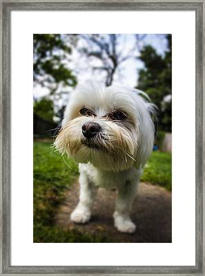Smile For The Camera Framed Print by Martin Newman