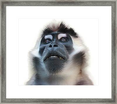 Smile Framed Print by Martin Newman