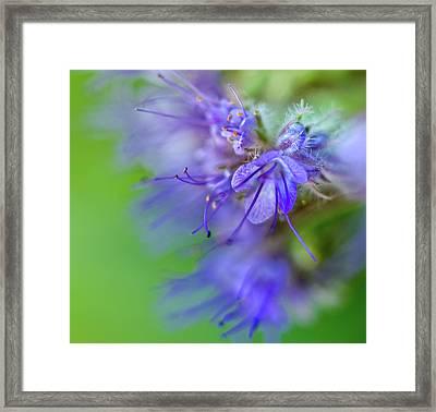 Smile Of Bell Flower Nr. 1 Framed Print by Mah FineArt