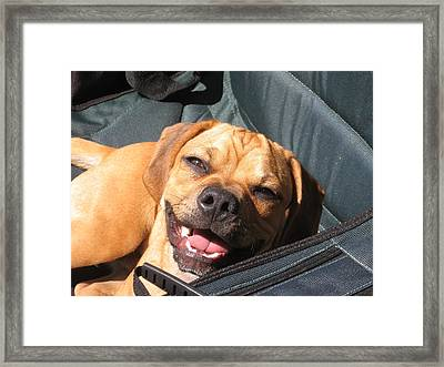 Smile Framed Print by Susan Carella