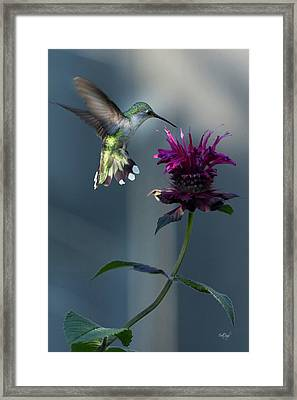Smiles In The Garden Framed Print by Everet Regal