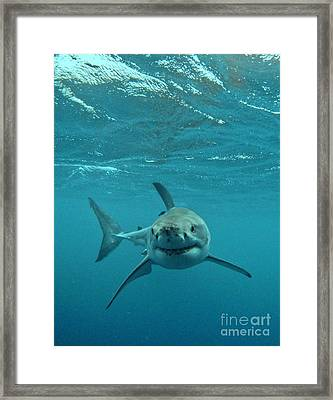 Smiley Shark Framed Print by Crystal Beckmann