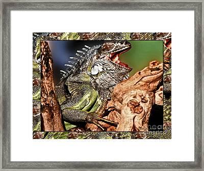 Smiling Adult Iguana  Framed Print by Carol F Austin