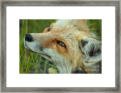 Smiling At The Sky Framed Print by Adam Jewell