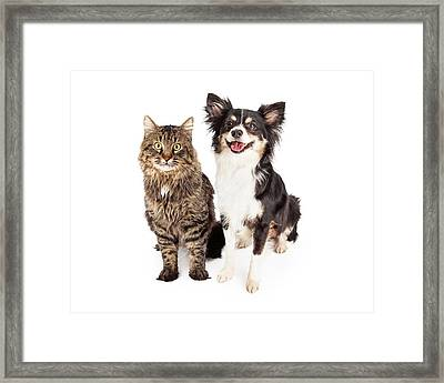 Smiling Chihuahua Mixed Breed Dog And Cat Together Framed Print