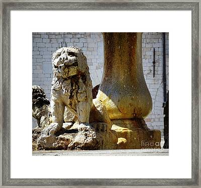 Smiling Fountain Lion Framed Print