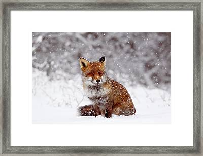 Smiling Fox In A Snow Storm Framed Print by Roeselien Raimond