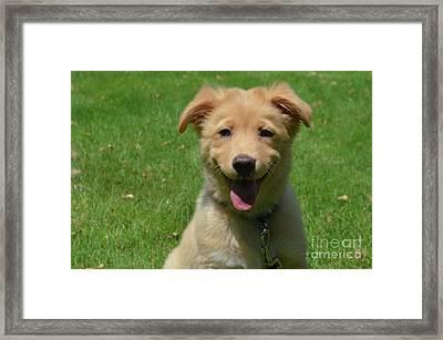 Smiling Nova Scotia Duck Tolling Retriever Puppy On A Summer Day Framed Print by DejaVu Designs