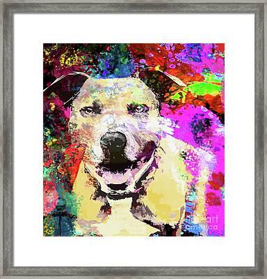 Smiling Pitbull Framed Print by Jon Neidert