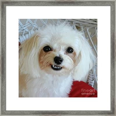 Smiling Puppy Framed Print