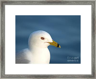 Smiling Seagull Framed Print by Susan Dimitrakopoulos