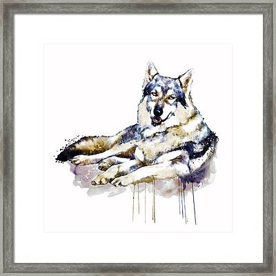 Smiling Wolf Framed Print by Marian Voicu